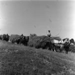 forage transportation with farm wagon