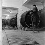 Turda, wine cellars