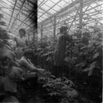 greenhouses Câmpia Turzii