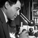 microscope, Roşca, Toma