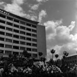 Bloc with tulips, Mihai Viteazul square