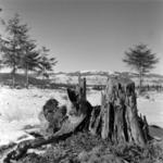 landscape Beliş winter