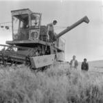 harvest barley Someşeni