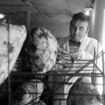 Mushroom rearing Floreşti