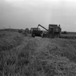 wheat combine harvester