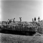 straw transportation