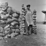 Moldoveneşti, onion