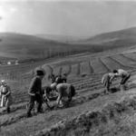planting fruit-trees