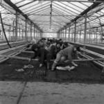 greenhouses Someşeni
