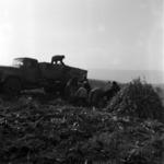plowing Căian, Gădălin, corn transportation