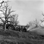 Spraying fruit-trees Dealu Morii