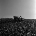 picking and transporting corn, mechanized