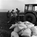 I.A.S. Mihai Viteazu, sowing C.A.P. Câmpia Turzii, prepairing the soil