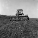 autumn sowing