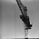 Tarnica, cranes, carpenters